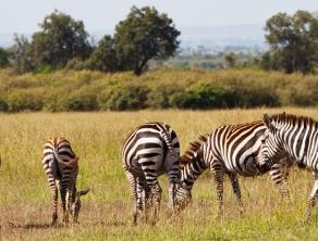 Check Safari Gallery 2