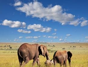 Check Safari Gallery 4